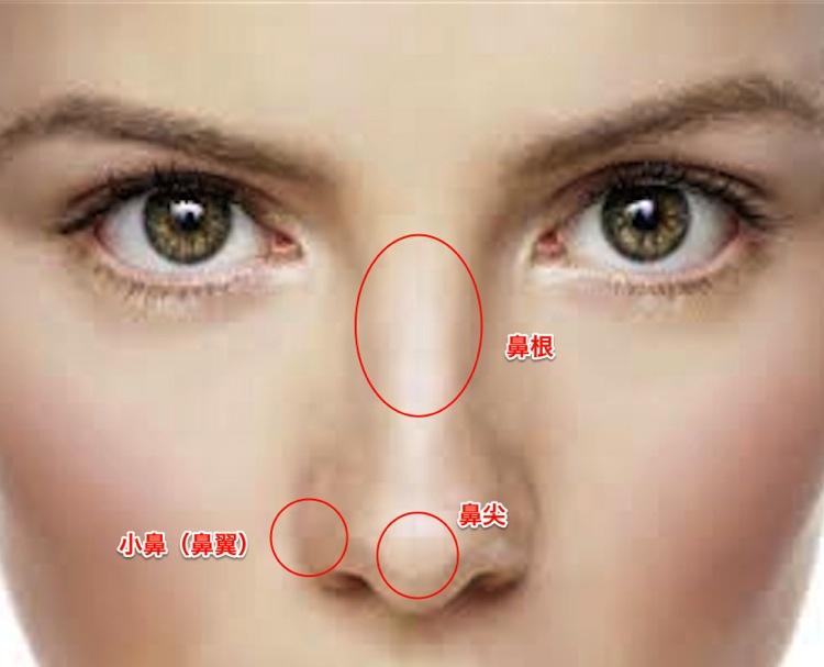 鼻の構成要素