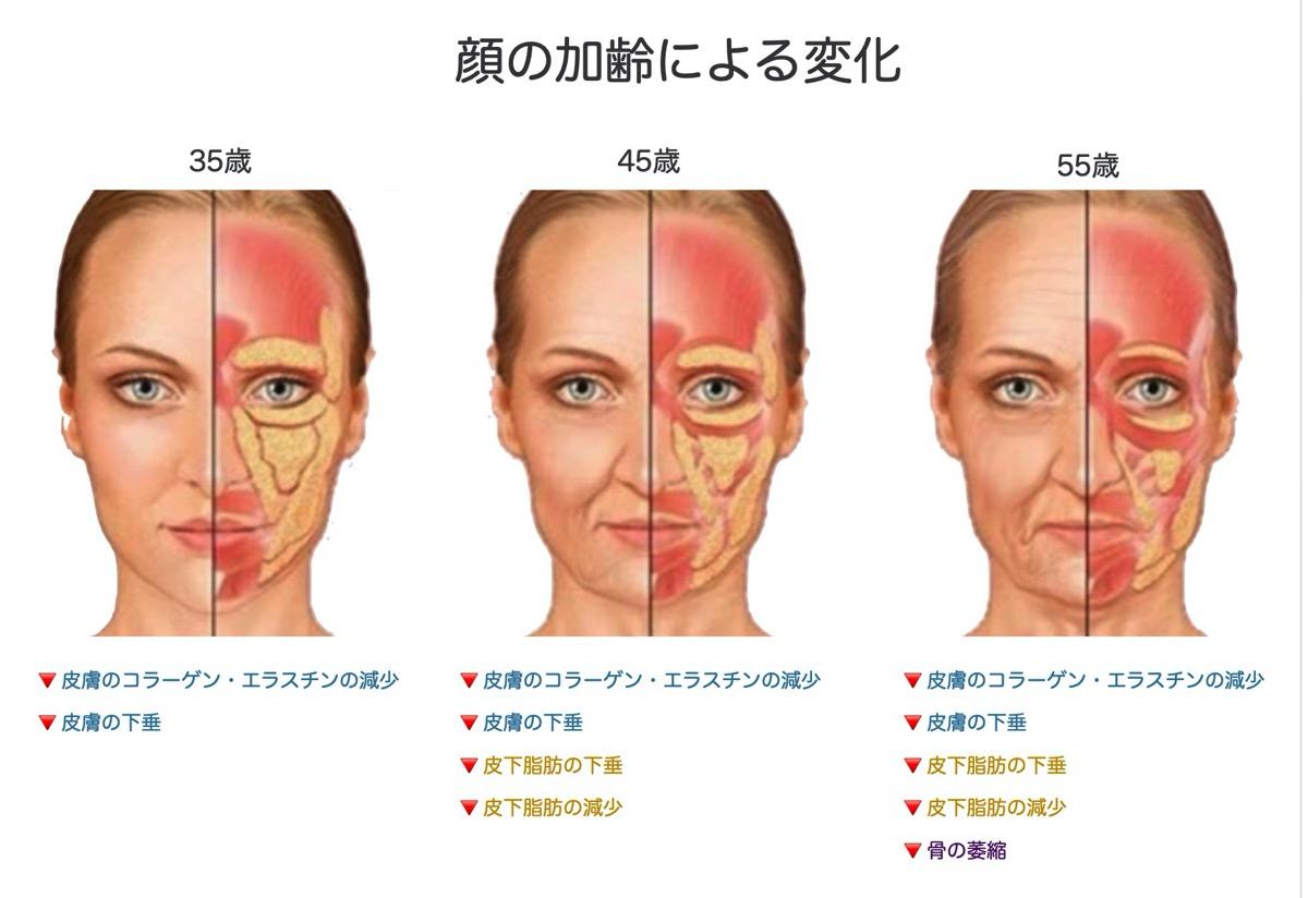 加齢と顔面